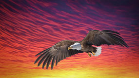 Eagle Fly Sunset Royalty Free Stock Photos