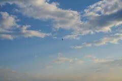 Eagle flyg i himlen med moln royaltyfria bilder