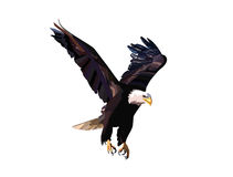 Free Eagle Flying Royalty Free Stock Image - 48712316