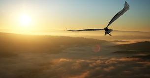 Eagle. Flying in the clouds at dawn stock photography