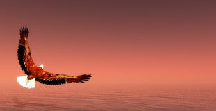 Eagle flying - 3D render Royalty Free Stock Images