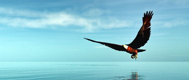 Eagle flying - 3D render. Eagle flying upon ocean by day - 3D render Royalty Free Stock Image