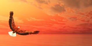 Eagle flying - 3D render Stock Photos
