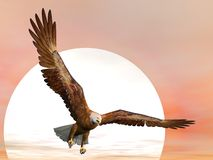 Eagle by sunset - 3D render. Eagle flying in front of big sun Royalty Free Stock Photo