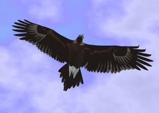 Eagle flying highly in the sky tracks down extract Stock Photo