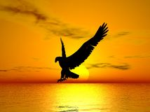 Eagle flying at ocean sunset
