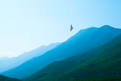 Eagle flying over beautiful green misty mountains. Raptor flying over misty mountains with a beautiful valley far below him Stock Photos