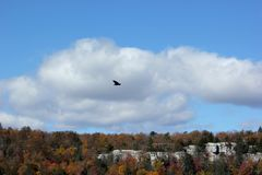 Eagle flying over mountains in New York State. Eagle flying over mountain ridge in New York State park Stock Image