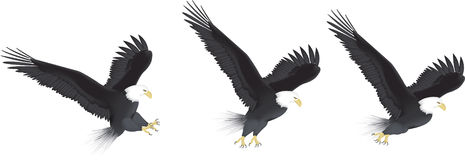 Eagle Flying Series Royalty Free Stock Photography