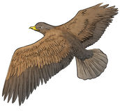Eagle. Flying eagle on the sky Stock Images