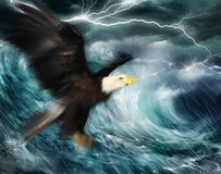 Eagle. An eagle flying in the storm Stock Photos