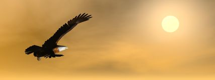 Eagle by sunset - 3D render. Eagle flying to the sun by cloudy brown sunset Stock Photography