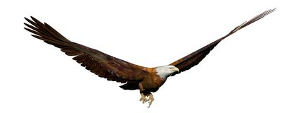 Eagle flying - 3D render. Eagle flying with wide open wings in white background Stock Images