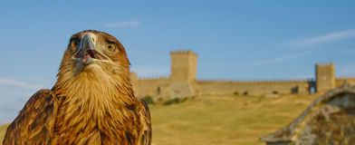 Eagle in front of castle. An eagle with an ancient castle in the background Stock Images