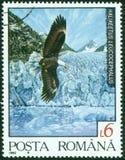 Eagle with glacier Stock Photo