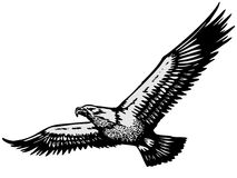 Eagle hand drawn. Vector illustration Stock Photo