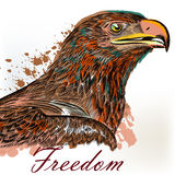 Eagle hand drawn bird illustration in engraved and watercolor st Royalty Free Stock Image