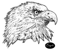 Eagle - hand drawn vector illustration isolated. Black Royalty Free Stock Image