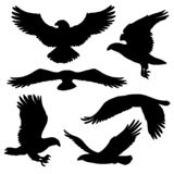 Eagle or hawk silhouettes with broad wings. Flying eagle, falcon and hawk black silhouette bird icons. Vector bird predator in flying poses for heraldic symbols stock illustration