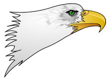 Eagle Head. A very detailed drawing of a bald eagle.  This could very easily be used for anything patriotic Royalty Free Stock Image