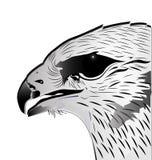 Eagle Head stock abbildung