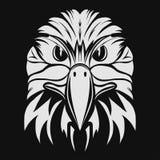 Eagle Head Fotos de archivo libres de regalías