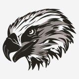 Eagle Head Fotografía de archivo libre de regalías