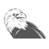 Eagle head in black and white style Royalty Free Stock Photos