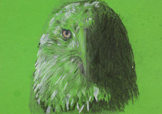 Eagle head, chalk sketch Stock Images