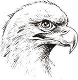 Eagle head Royalty Free Stock Photography