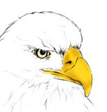 Eagle head by hand drawing; wildlife power hunter sketch art illustration on white background Stock Photography