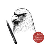 Eagle head hand drawn vector illustration Stock Photos