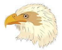 Eagle head isolated on white background Stock Photos