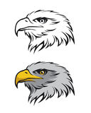Eagle head Royalty Free Stock Image