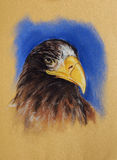 Eagle head pastel drawing Royalty Free Stock Photos
