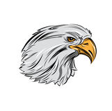 Eagle Head In Profile Royalty Free Stock Photography