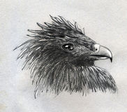 Eagle head sketch. Pencil drawing, sketch of a single feathery eagle head with blinking beak and eye made on rough paper Royalty Free Stock Photo