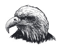 Eagle head. vector illustration Stock Image