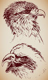 Eagle Heads. Hand-drawn, two grungy Eagles Royalty Free Stock Images