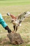 Eagle-het klappen over vlees op stomp wordt geplaatst die stock fotografie