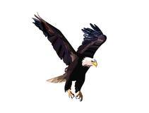 Eagle-het vliegen Royalty-vrije Stock Afbeelding