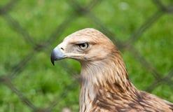 Eagle hinter einem Zaun im Park Stockfotos