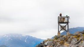 Eagle hockte an der Spitze eines Bullauges Lizenzfreies Stockbild