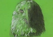Eagle-hoofd, krijtschets Stock Afbeeldingen