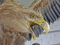 Eagle hunter / freedom. Eagle hunter / symbol of freedom Stock Photography