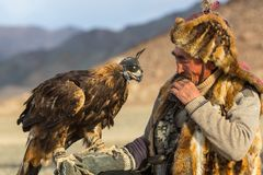 Eagle Hunter while hunting to the hare with a golden eagles on his arms in the mountains of Bayan-Olgii aimag. SAGSAY, MONGOLIA - SEP 28, 2017: Eagle Hunter Royalty Free Stock Photography