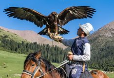 Eagle Hunter rymmer hans örnar på hästrygg, ordnar till för att ta flyg royaltyfri foto
