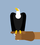 Eagle hunting. Bald eagle on his arm. Trained wild bird of prey. Stock Photography