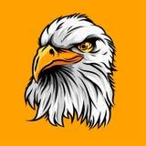 Eagle huvudvektor Arkivbild