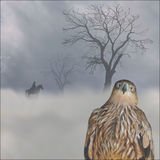 Eagle i dimman royaltyfri fotografi